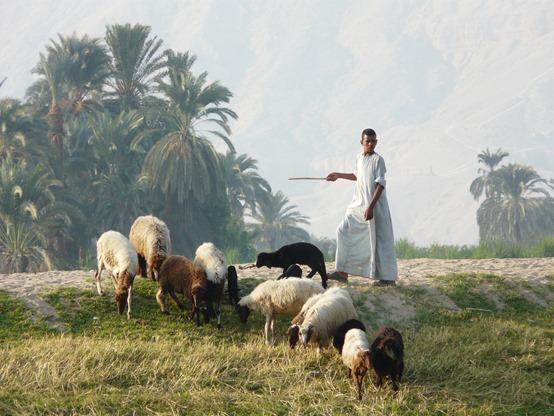 shepherd-1534713_1920