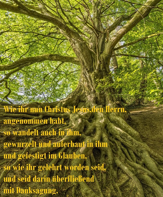 tree-3385957_1920