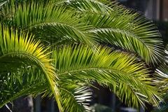palm-4934832_1920